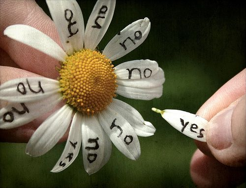 החלטה על אל הורות מיוצגת במשחק קטיפת עלי הפרח