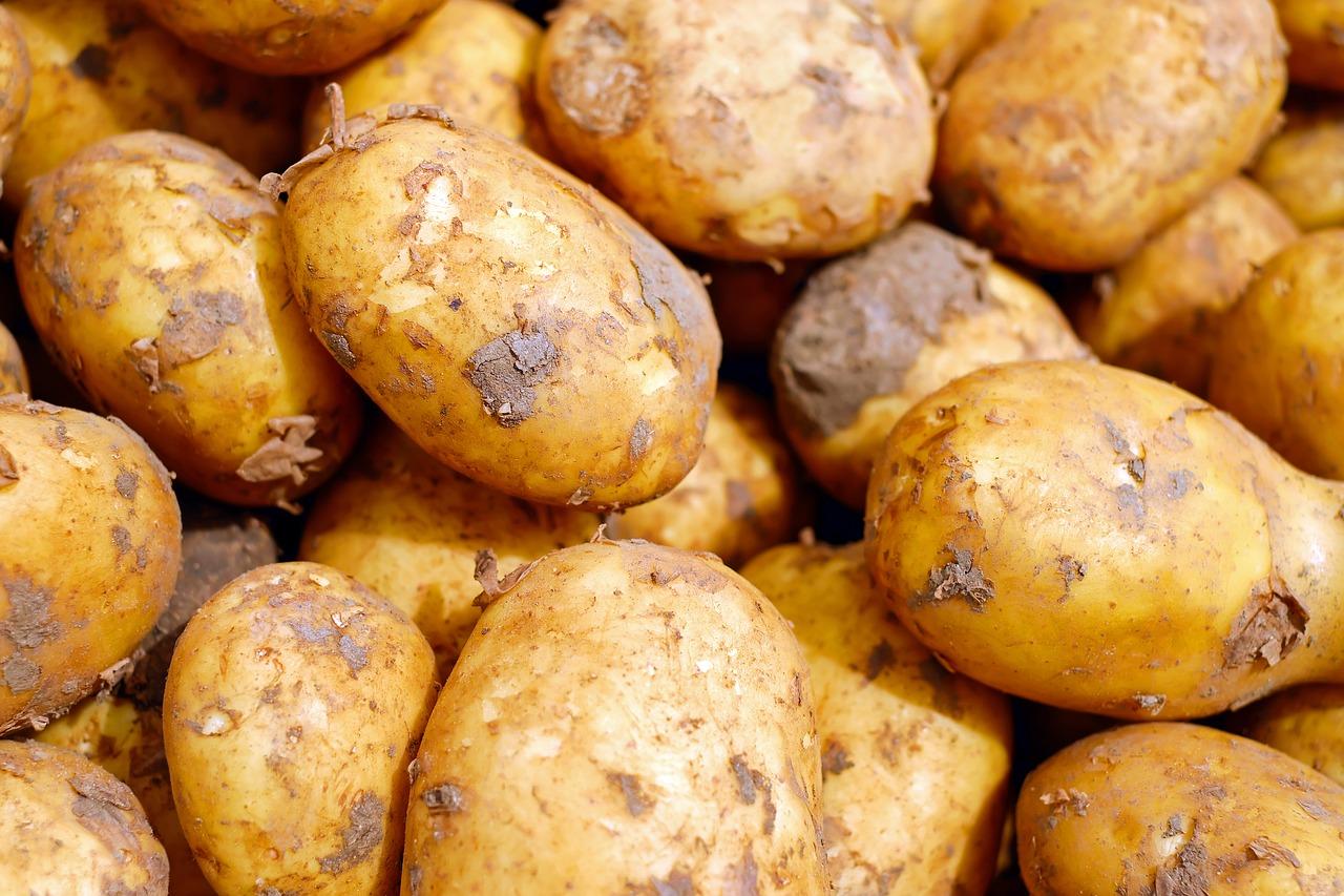 תפוחי אדמה סימן לשיר על עוני מאת אורית קלופשטוק